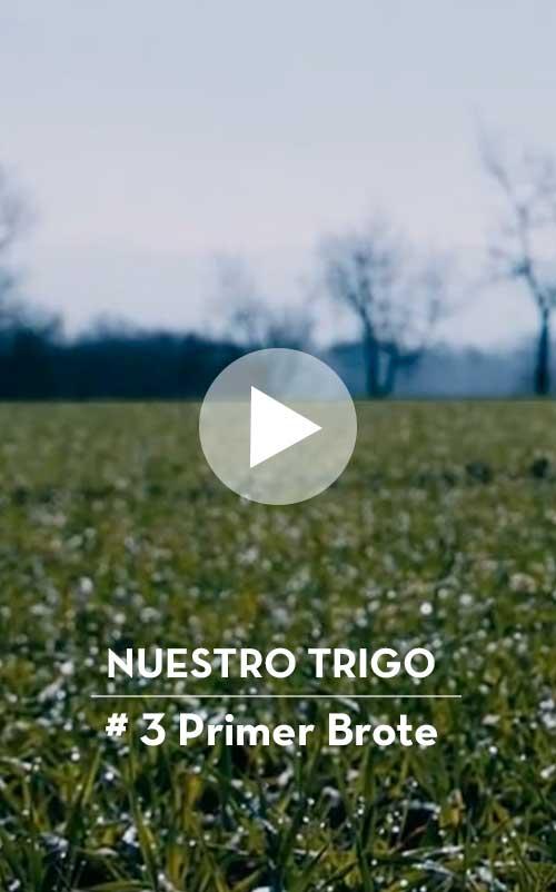 NuestroTrigo-1LaSiembra-Mobile